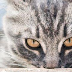 gatto.randagio